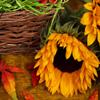 Jigsaw: Autumn Sunflower