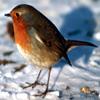 Jigsaw: Bird in Snow