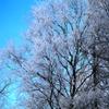 Jigsaw: Frosty Tree