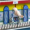 Jigsaw: Parrot Police