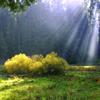 Jigsaw: Sunny Meadow