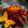 Kingdom of the flowers: Garden flowers
