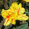 MLL Breaker Gallery: Flowers